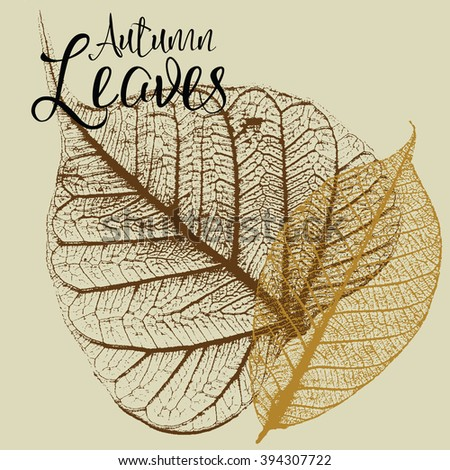 Two autumn leaf skeleton vector illustrations - stock vector