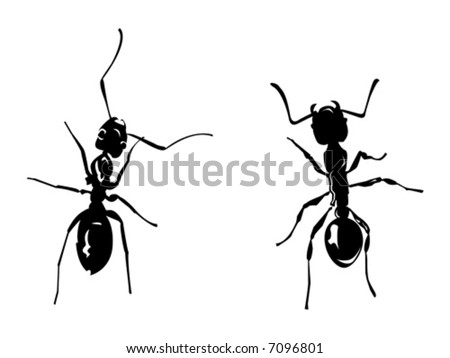 two black vector ants on white background - stock vector
