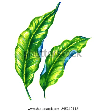 two classical embellished realistic art nouveau style leaves. exotic leaves isolated on white. vector illustration - stock vector