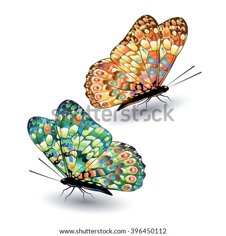 Two colorful butterflies isolated on white background. Vector illustration. - stock vector
