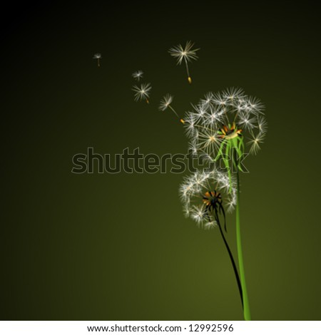 two dandelions in wind on dark background - stock vector