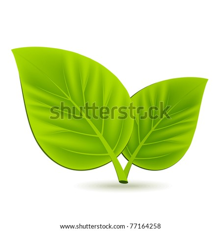 Two green leaves on white background - stock vector