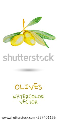 two green watercolor olives on green branch with lives. vector version - stock vector