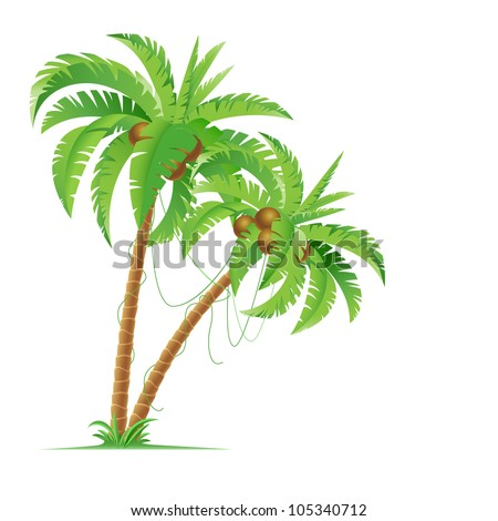 Two palm trees. Illustration for design on white background - stock vector