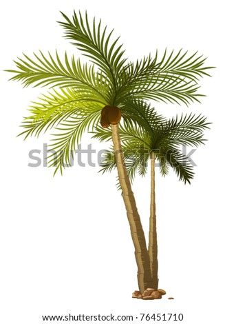 two tropical palm-tree isolated on white background - stock vector