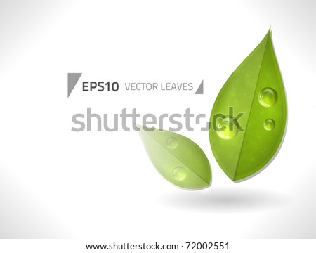 Two vector leaves against a white background for your designs - stock vector