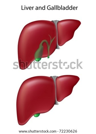 Two views of liver and gallbladder.