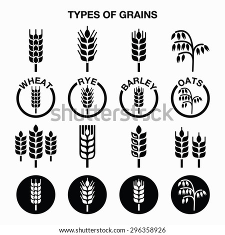 Types of grains, cereals icons - wheat, rye, barley, oats  - stock vector