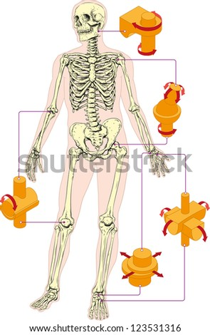 Types of human joints - stock vector