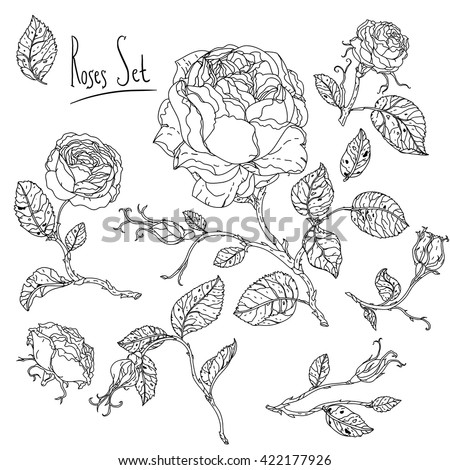 Uncolored heart shape frame by roses in zen art style, could be used for Adult coloring book. Hand-drawn, doodle, vector the best for your design, wedding cards, coloring book. Black and white. - stock vector
