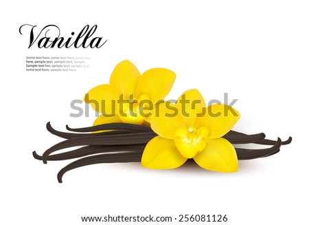 Vanilla background. Vector. - stock vector