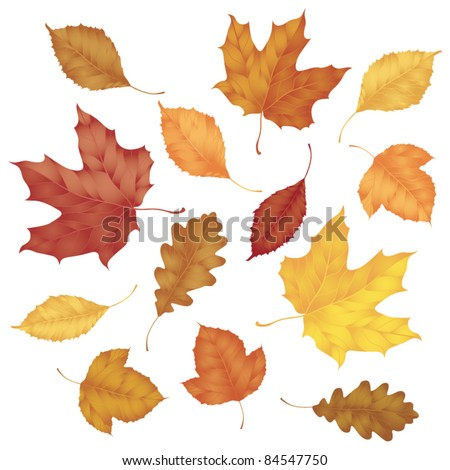 Various autumn leaves isolated on white background