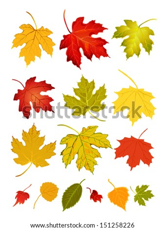 Various autumn leaves isolated on white background.Vector illustration