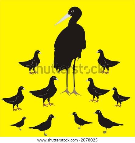 various birds - vector illustration - stock vector