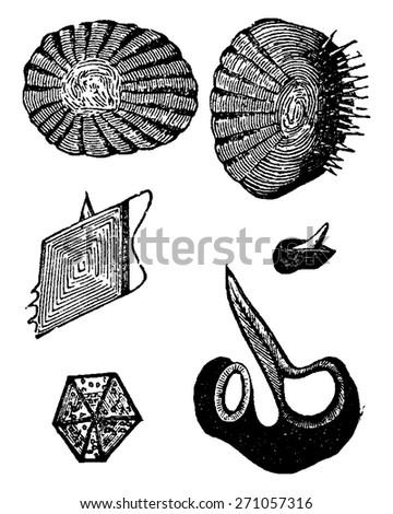 Various forms of fish scales, vintage engraved illustration. La Vie dans la nature, 1890. - stock vector