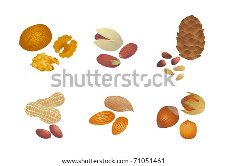 Various nuts. High-quality vector illustration