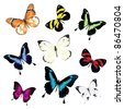 Various vector butterflies on white background - stock