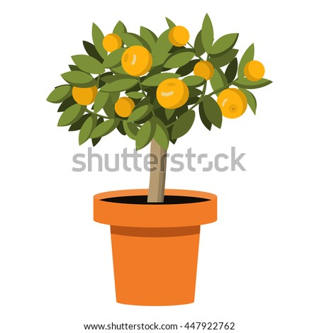 Vector an illustration with the image of orange tree with fruits in a pot. citrus trees  - stock vector