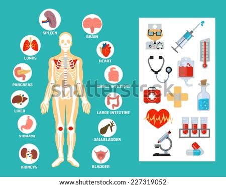 Vector anatomy flat icon set - stock vector