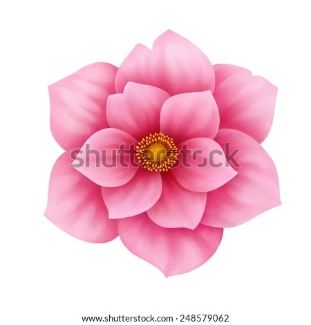 Vector anemone pink flower decorative illustration isolated on white background - stock vector