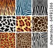 vector animal skin textures of tiger, zebra, giraffe, leopard and cow - stock vector