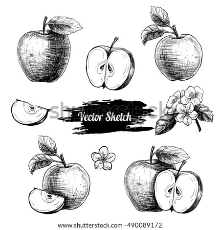 Vector apples hand drawn sketch with flowers .  Sketch vector  food illustration. Vintage style