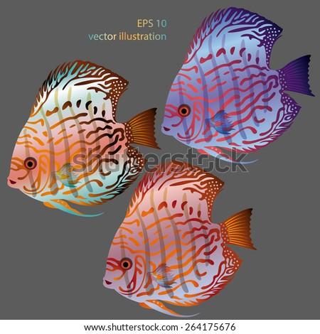 vector aquarium fish discus - stock vector