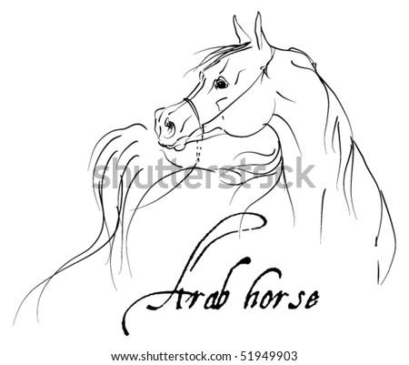vector arab horse - stock vector