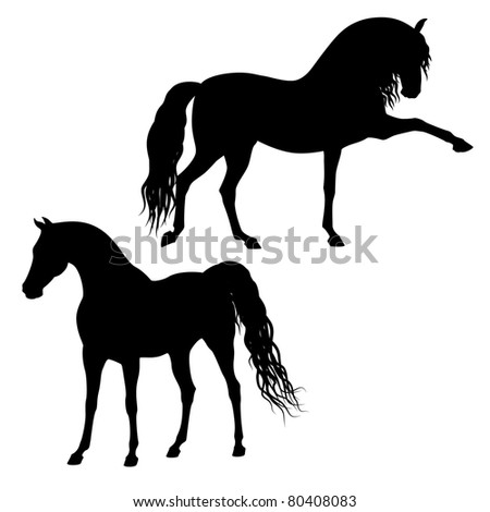 Vector arabian and andalusian horse's silhouettes isolated on a white background - stock vector