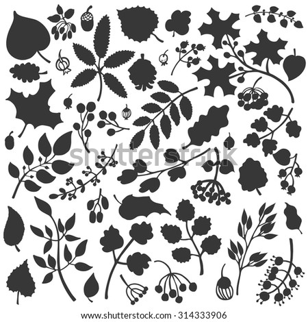 Vector autumn leaf and berries set.Isolated Silhouette of berries, leaves,branches,acorn.Fall harvest.Use for design template,pattern, wallpaper, web page and print.Vector Illustration - stock vector