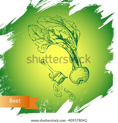 Vector background Beet. Illustration vegetable. - stock vector