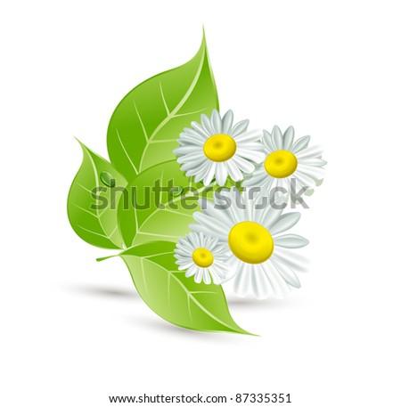 vector background with daisies and green leaves - stock vector