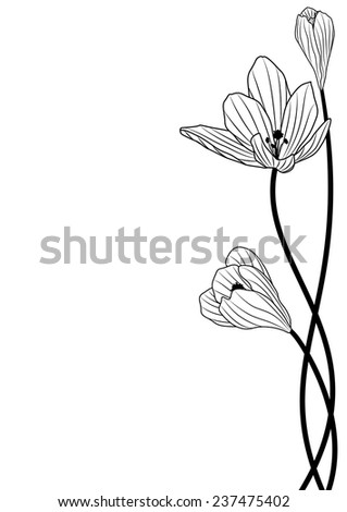 vector background with flowers of crocus in black and white colors