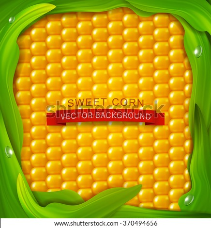 vector background. Yellow corn, green leaves around - stock vector