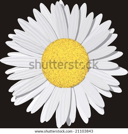 VECTOR: Beautiful daisy - Background can be any color. - stock vector