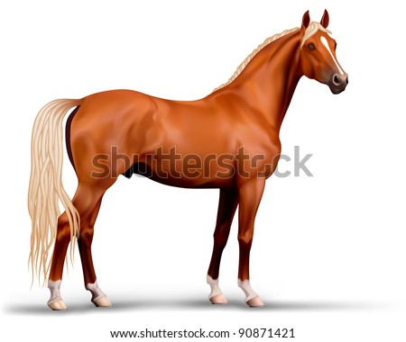 Vector beautiful realistic flaxen chestnut horse