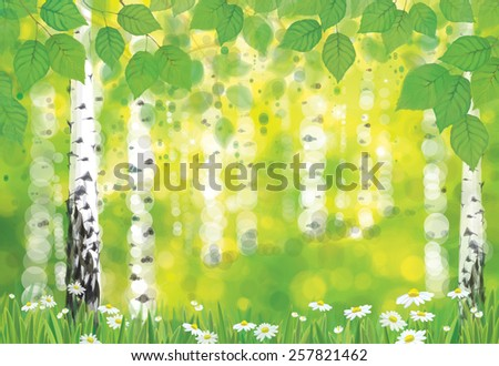 Vector birch forest on spring bokeh background. - stock vector