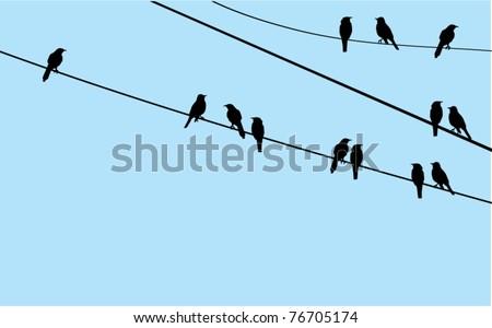 vector birds sitting on wire - stock vector