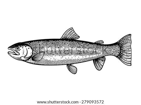 Vector Black and White Salmon Fish Illustration - stock vector