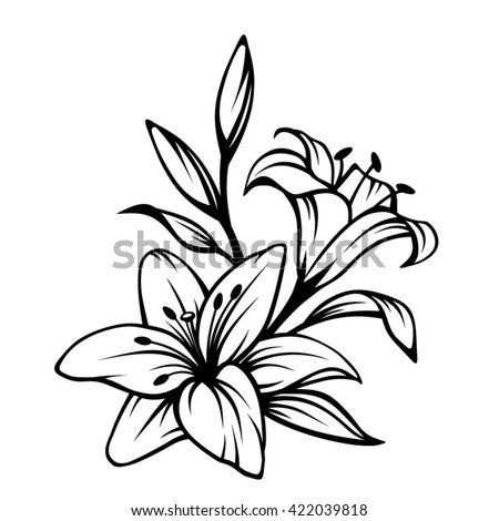 Vector black contour of lily flowers isolated on a white background
