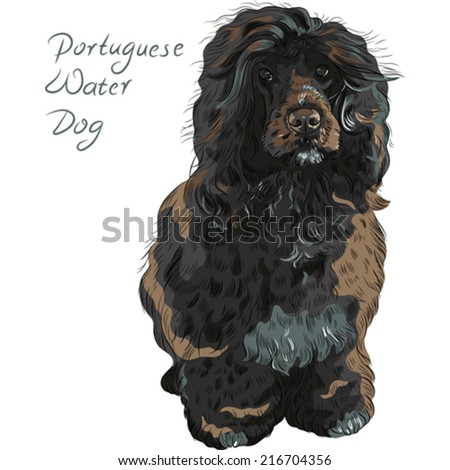 Vector black curly dog breed Portuguese Water Dog (Cao de Agua ...