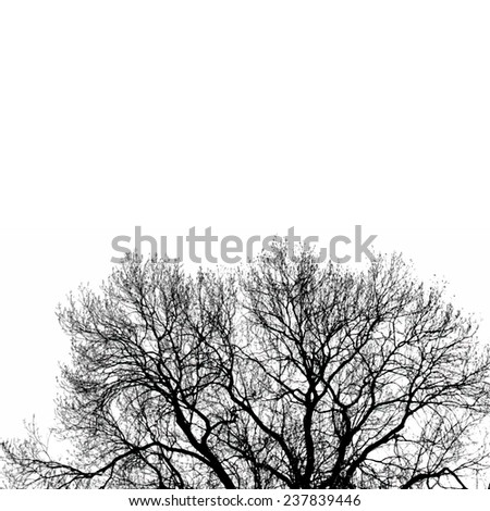 Vector black silhouette of tree