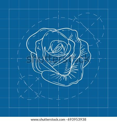 Vector blueprint rose on engineer architect stock vector hd royalty vector blueprint rose on engineer and architect background malvernweather Choice Image
