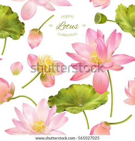 Vector botanical seamless pattern pink lotus stock vector 561027025 vector botanical seamless pattern with pink lotus flowers background design for natural cosmetics health mightylinksfo