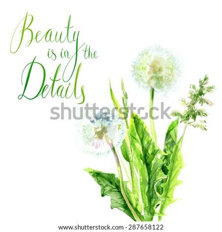 Vector botanical watercolor sketches of dandelion field - stock vector
