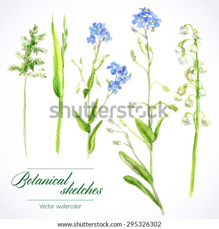Vector botanical watercolor sketches of wild grasses and flowers - stock vector