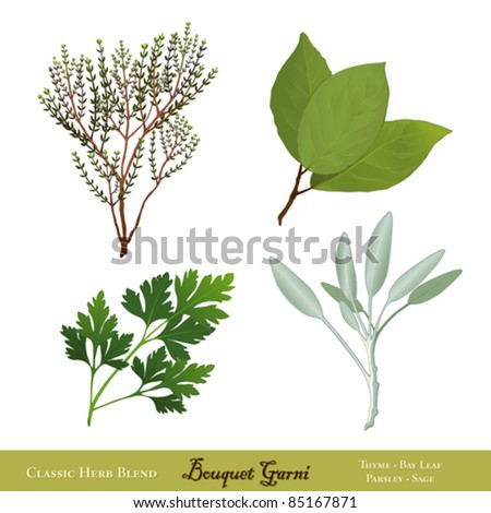 vector - Bouquet Garni. Classic French herb blend for cooking: English Thyme, Bay Leaves, Italian Flat Leaf Parsley, Garden Sage, isolated on white. EPS8 compatible. - stock vector