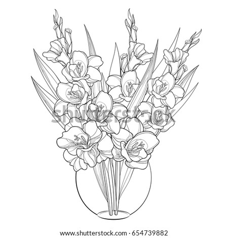 vector bouquet with gladiolus or sword lily in vase flower bud and leaf in black