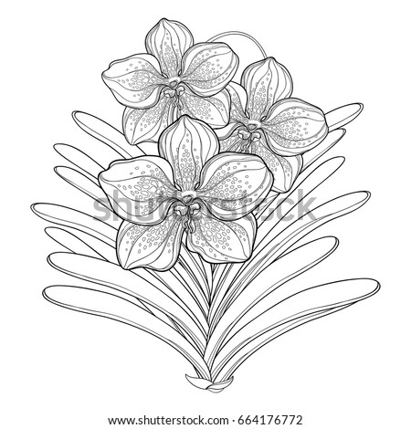 Black orchid coloring page