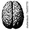 Vector brain from atlas published in 1851(The iconographic encyclopedia of science, literature and art). - stock photo